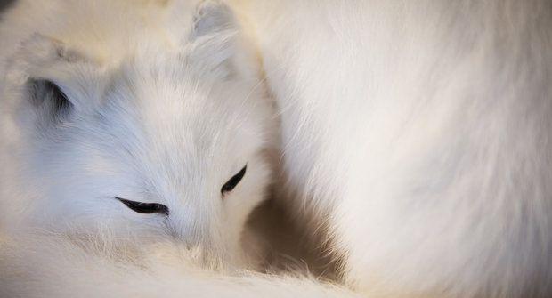 Nový kožich na zimu - jak se převlékají zvířata