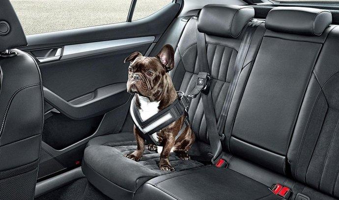 Poutáte v autě svého psa? Škoda začala prodávat psí pásy