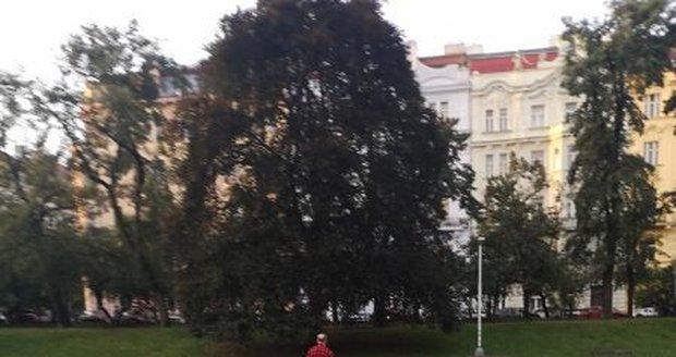 Policie zadržela muže, který údajně masturboval v sadech Svatopluka Čecha v Praze. Hledá další svědky.
