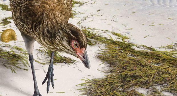Nečekaný objev: Kachna z éry dinosaurů přepisuje paleontologické učebnice