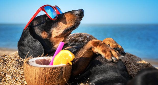 Mourrisonova poradna: Co dělat o prázdninách?