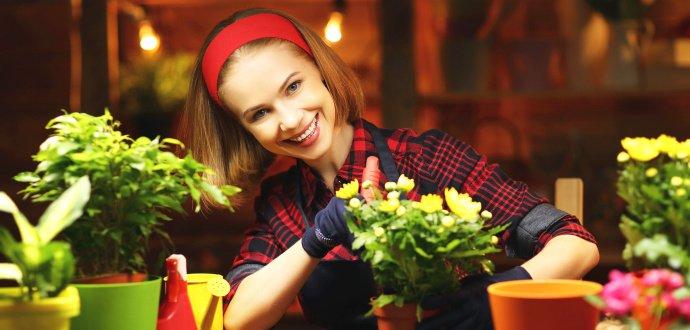 Jednoduchý návod, ako si predpestovať vlastné sadenice