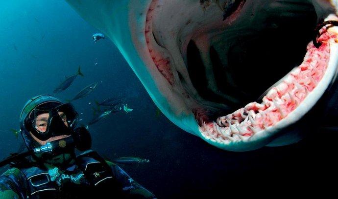 Při natáčení velkého bílého žraloka bez klece.