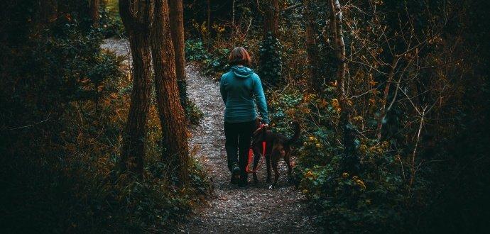 Podzimní výbava pejskařů: 5 vychytávek pro venčení za tmy