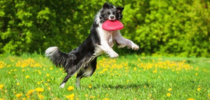 5 tipů, jak zabavit psa