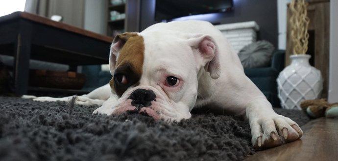 Poznejte nejčastější psí nemoci
