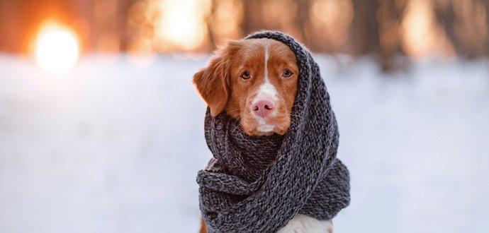 4 rady, jak pečovat o psa v zimě