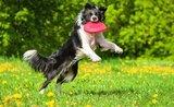 5 tipov, ako zabaviť psa