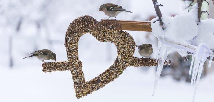 Píp, píp! Jak správně krmit ptáky v zimě