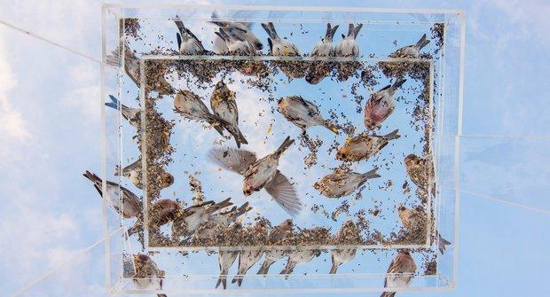 Sypejte ptáčkům: Hlad je mrcha