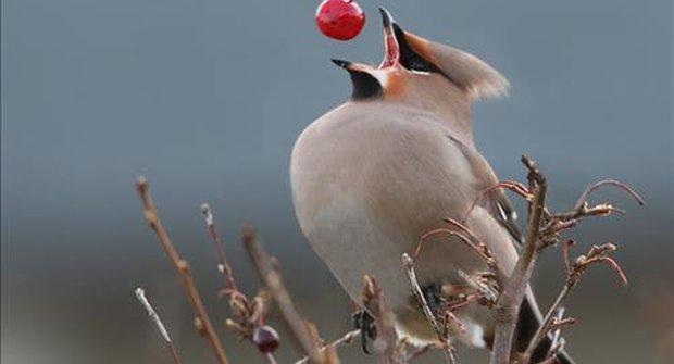 Sypejte ptáčkům, zima je pro ně zatěžkávací zkouška