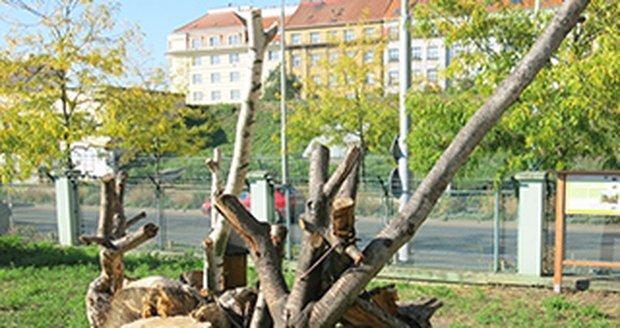 Pražské vodovody a kanalizace ve svých areálech pěstují rozkvetlé trávníky a instalují ptačí budky i včelí úly