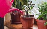 Nás nezničíte! 4 izbové rastliny, ktoré prežijú v každom byte