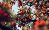 Jesenné pečenie: 3 recepty na šípkové dobroty