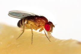 Dobrodružství poznání: Střevní bakterie vám mohou prodloužit život