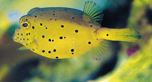 Roztomilí braši: Ryby, které se nezdají