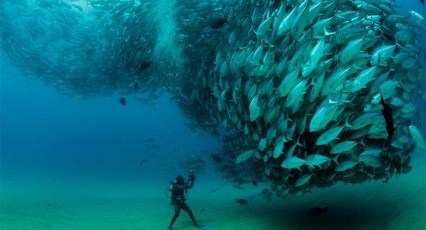 Rybí tornádo si hraje na mořského démona