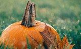 Záhradkársky kalendár: september