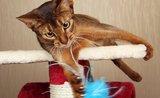 Odnaučte kočku ničit koberce. Pomůže vhodné škrabadlo
