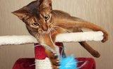 Odnaučte mačku ničiť koberce. Pomôže vhodné škrabadlo
