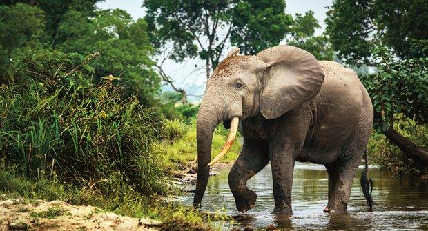 Válka o slony: Pytláci nemají slitování