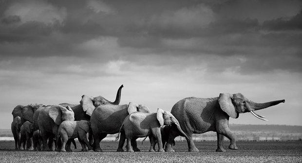 Sloni na cestě za vodou: Kde nevysychá?