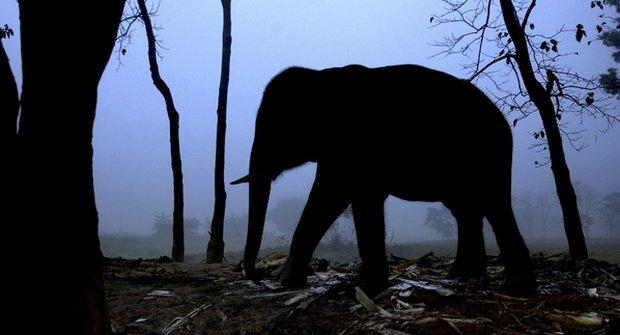 Tajemství nočního života slonů