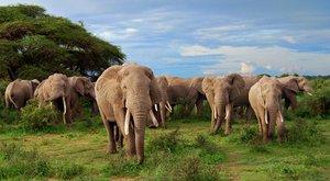 Telegraf savany: neslyšitelná řeč slonů