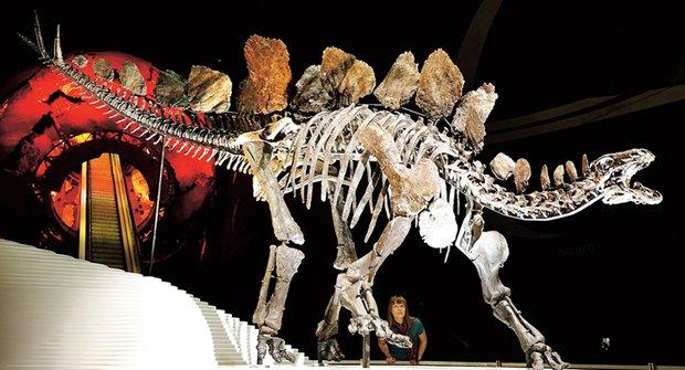 Kompletní Sofie: Zbytky nejslavnějšího dinosaura