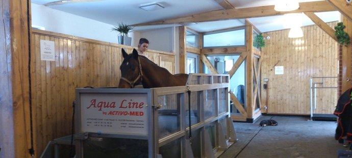 Tréninkový a rehabilitační vodní pás pro koně používali ještě před rokem i v Hrobicích u Pardubic.