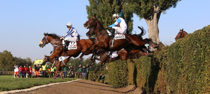 Taxis nezvládli dva koně, oba jsou po závodě v pořádku