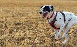 4 nejlepší tipy, na sportování se psím parťákem