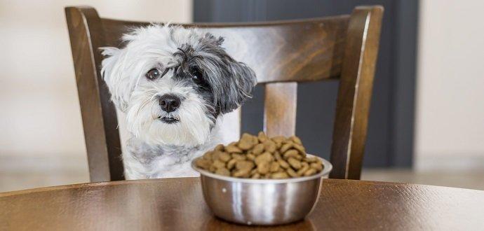 Jak krmit štěně: 6 věcí, na které si dát pozor