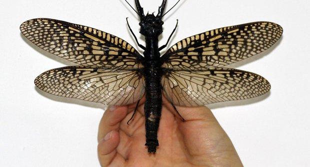 Největší (a nejhnusnější) nový druh vodního hmyzu objevili v Číně