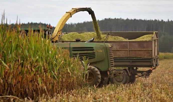 ilustrační foto, sklizeň, sucho, kukuřice
