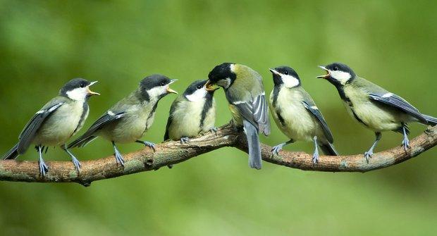 Lovci ptáků: Kočky a kudlanky