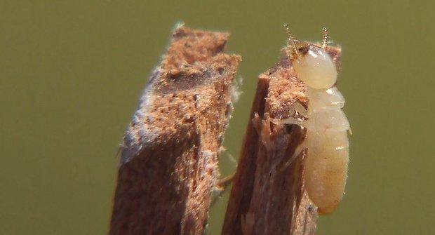 Nečekaná návštěva: Tajemství termitího mrakodrapu