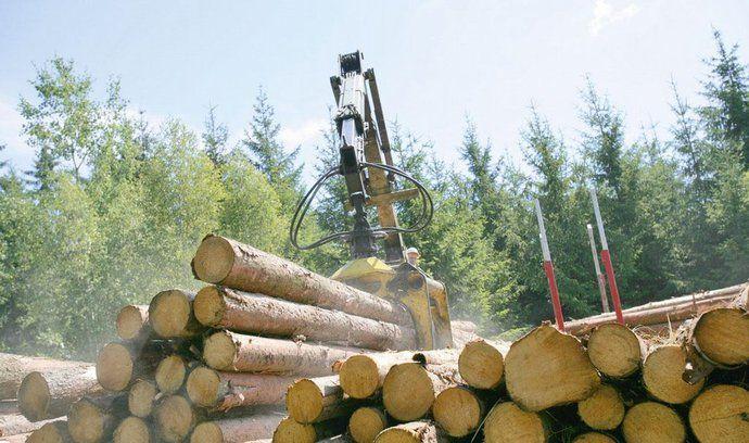 Těžba dřeva