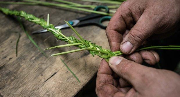 Košíkářská škola pletení: Na počátku byla tráva