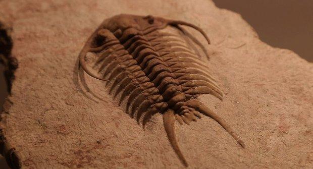 Trilobiti brázdili oceány jako první