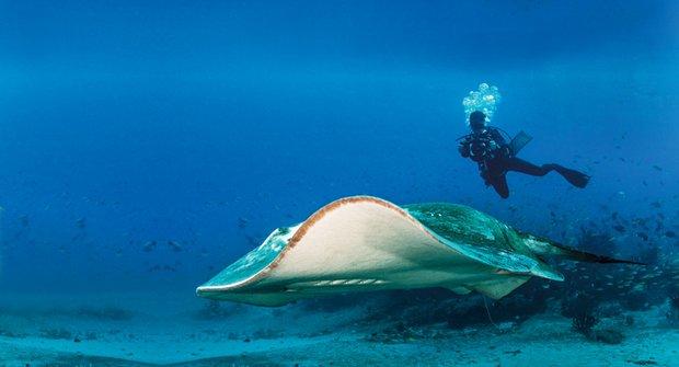 Tajuplné trnuchy: Potápění za vědou