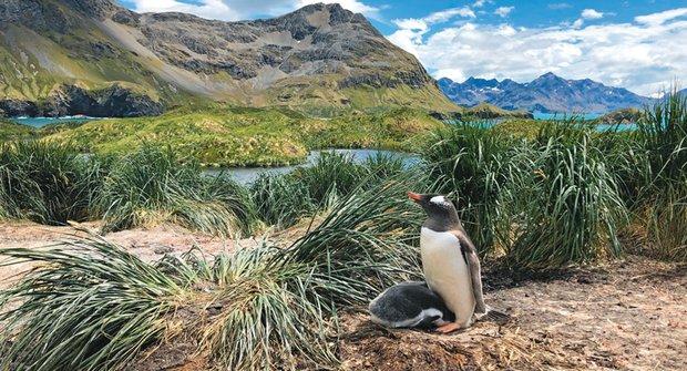 Stejní tučňáci nejsou stejní: Tučňák oslí překvapil vědce