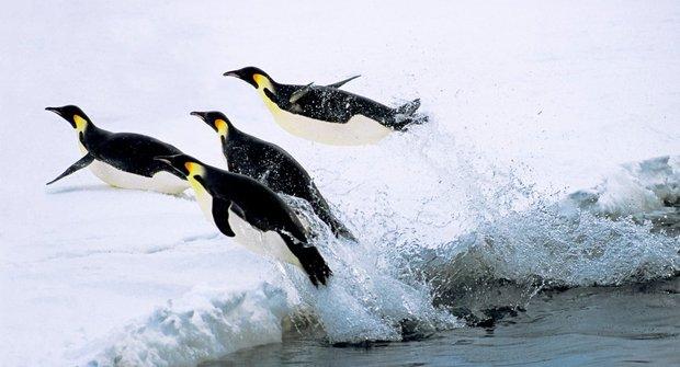 Zašpiněný led: Jak satelit nachytal tučňáky