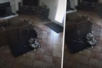 Osvobodil psího mazlíčka z obojku záhadný duch? Tajemné video rozpoutalo vášnivou diskuzi