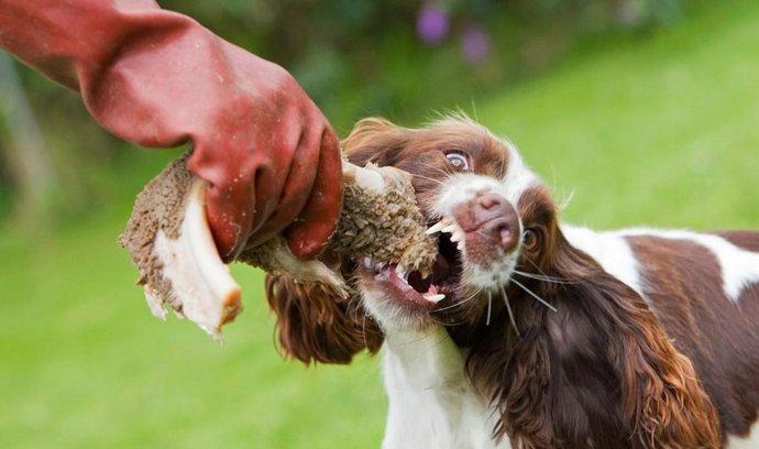 V Moskvě řádí travič psů. (Foto: Profimedia)
