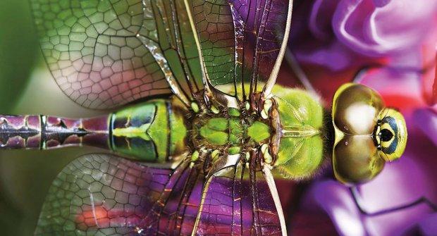 Předvídavé vážky: Proč kořist neunikne