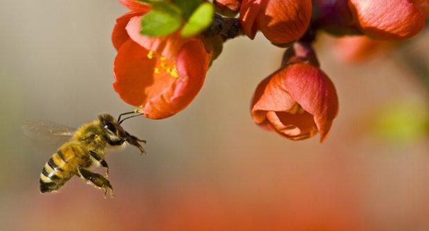 Nové výzkumy naznačují: I včely mají deprese!