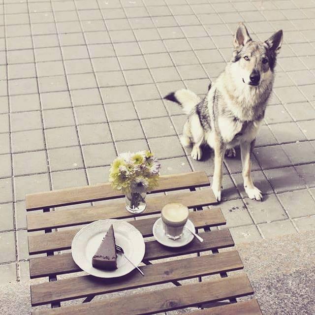 Vlk ví, co je přírodní a dobré.