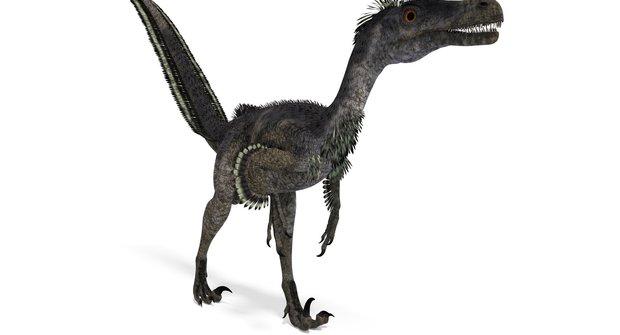 Dinosauři: Děsivý lovec Velociraptor mongoliensis