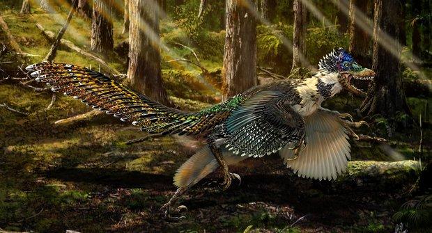 Raptor: Opeřený prehistorický zabiják